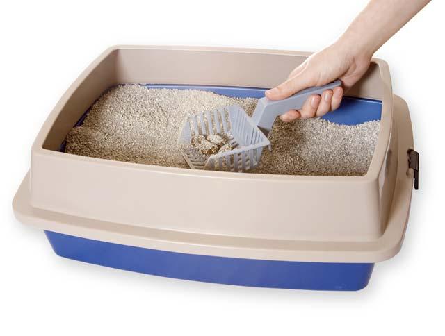 Toxoplasmose na gravidez: areia de gato
