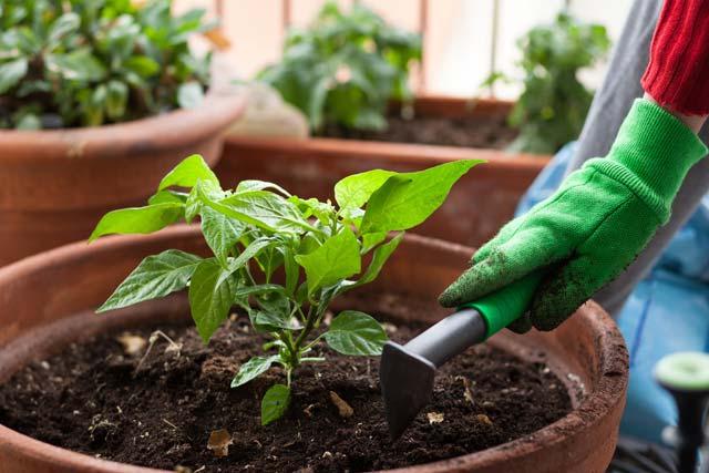 Toxoplasmose na gravidez: luvas de jardinagem